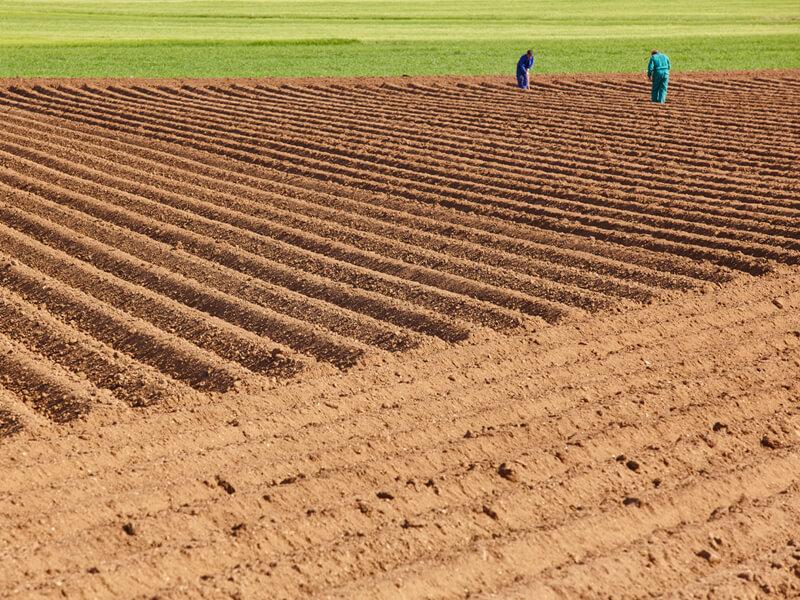 pre-season-de-producepay-la-solucion-a-tu-flujo-de-efectivo-hasta-10-meses-antes-del-inicio-de-tu-cosecha