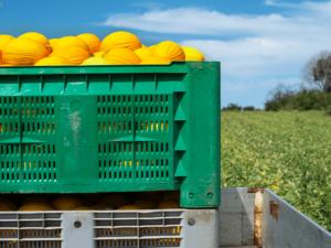 ley-paca-protege-la-venta-y-comercializacion-de-tus-productos-en-el-mercado-de-estados-unidos