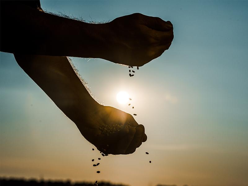 cómo-afectó-el-impacto-climático-en-agricultura-en-2020